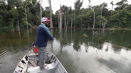 Pescaria de Tucunaré Pinima no Rio Capim