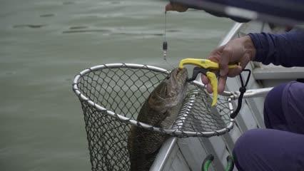 Pescaria em Juquiá/SP