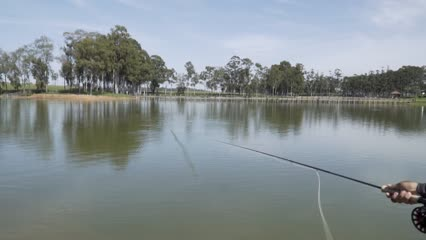 Pescaria de tilápia e carpa capim