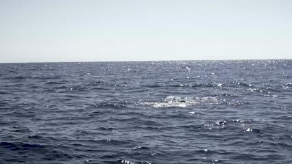Pescaria variada e muita ação na região da Ilha da Queimada Grande