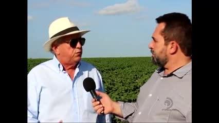 Grupo Santana traz de volta o cultivo de algodão para Alagoas