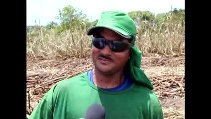 Usina Santo Antônio inicia nova safra de cana-de-açúcar