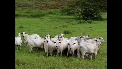 Leilão Estrela do Norte estreia a oferta de touros nelore
