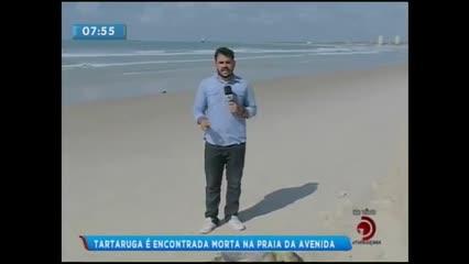 Tartaruga foi encontrada morta na Praia da Avenida