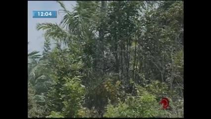 Bombeiros controlam incêndio em vegetação na Av. Leste-Oeste