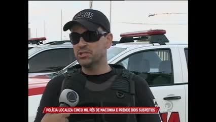Polícia localiza cinco mil pés de maconha e prende dois suspeito