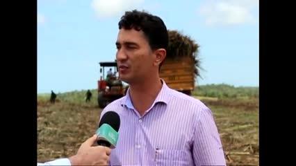 Usina Santo Antônio aposta em crescimento na safra 2018/2019