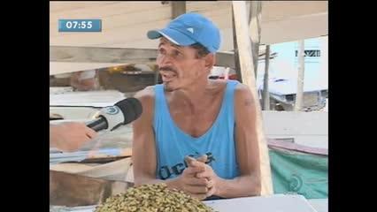 O tamanho do sururu vem preocupando pescadores da Lagoa Mundaú
