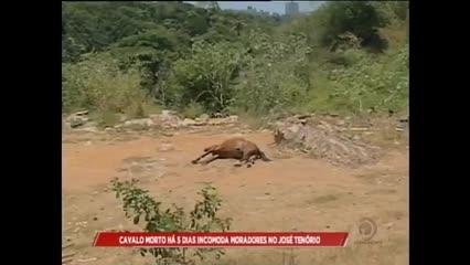 Cavalo morto há 5 dias incomoda moradores no José Tenório
