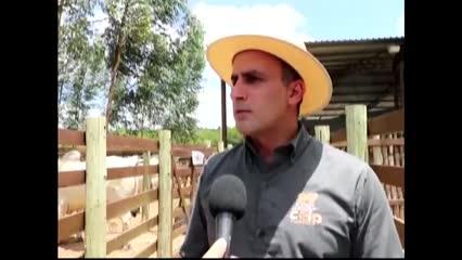 Criadores de Alagoas lançam marca de carne prime