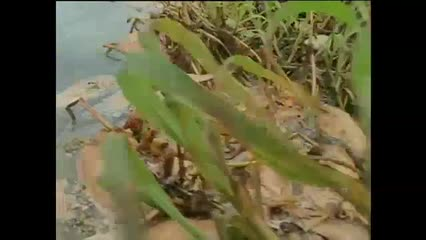 IMA fiscaliza a mortandade de peixes no rio Mundaú