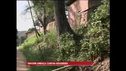 Árvore ameaça cair na Goiabeira