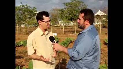 Confira os primeiros resultados do projeto Forrageiras do Semiárido
