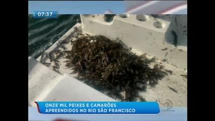 Mais de 11 mil peixes e camarões foram apreendidos durante ações da FPI