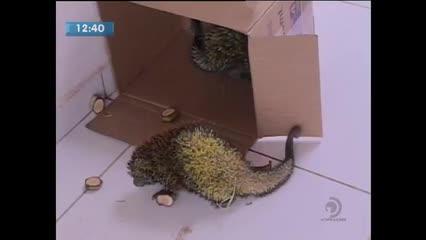 Dois animais foram resgatados em rodovia de Maceió