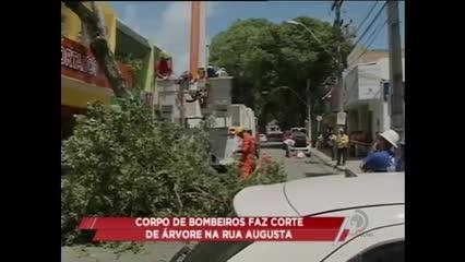 Uma árvore centenária tombou na Rua Augusta