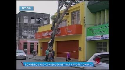 Árvore está prestes a cair no Centro de Maceió