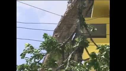 Prefeitura analisará árvores centenárias no centro da capital