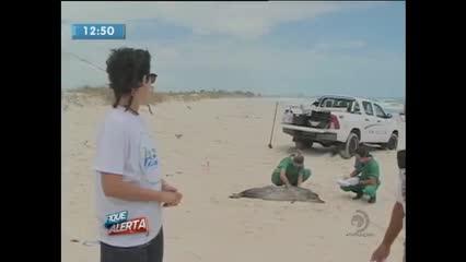 Golfinho foi encontrado morto esfaqueado na praia do Pontal da Barra