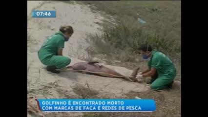 Golfinho foi encontrado morto com marcas de faca e rede de pesca
