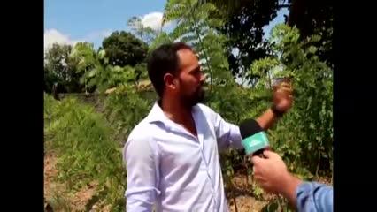 Produtor obtém bons resultados do consórcio de gliricídia com coqueiros