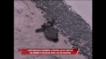 Tartarugas morreram atropeladas depois de serem atraídas por luzes de postes