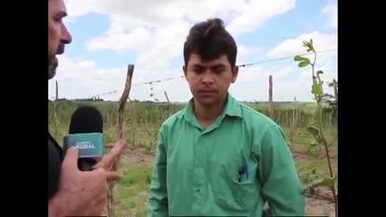 Produção de maracujá garante renda aos agricultores familiares de Pindorama