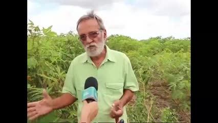 Pesquisadores falam sobre o manejo adequado da mandioca