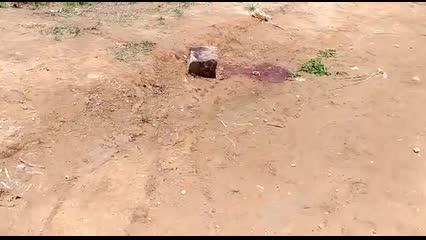 Cabeça humana é encontrada em Rio Largo