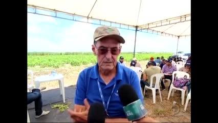 Pesquisador da Embrapa dá dicas sobre o cultivo de mamão