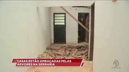 Árvore caiu e atingiu duas casas no bairro da Serraria