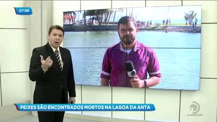 Peixes foram encontrados mortos na Lagoa da Anta