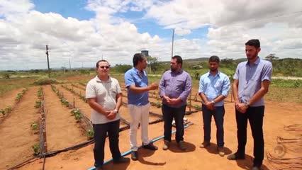 Projeto de irrigação por gotejamento em Arapiraca