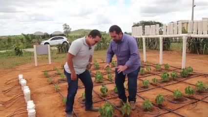 Projeto de irrigação por pulso para a cultura do pimentão