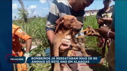 Bombeiros já resgataram mais de 90 animais só este ano em Alagoas