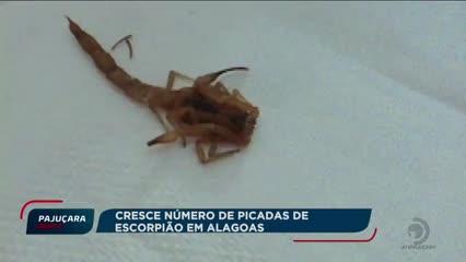 Casos de picadas de escorpião aumentam em Alagoas
