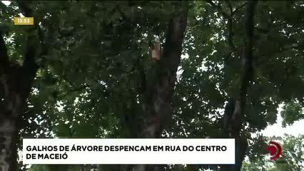 Galhos de árvore despencam em rua do Centro de Maceió
