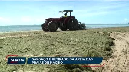 Sargaço é retirado da areia das praias de Maceió