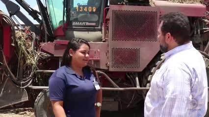 Acompanhe trabalho da primeira mulher especializada na operação de máquinas agrícolas pesadas de AL