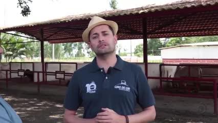 Agropecuária Pereira apresenta lotes que serão ofertados no Leilão Genética de Berço
