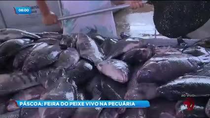 Parque da Pecuária recebe a VI edição da Feira do Peixe Vivo