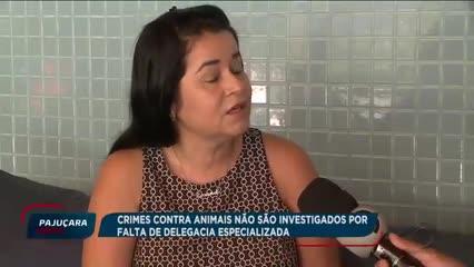Crimes contra animais não são investigados por falta de Delegacia Especializada