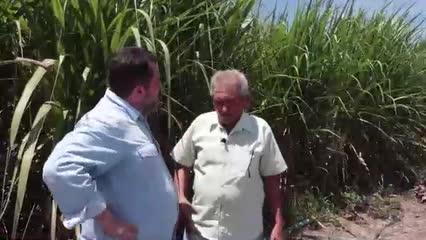Cooperativa Pindorama mostra resultado do projeto de irrigação de cana-de-açúcar