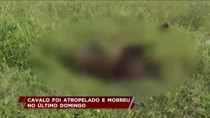 Cavalo foi atropelado e morreu no último domingo