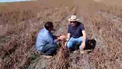 Restos de cultura são aproveitados por produtores que utilizam o sistema de plantio direto