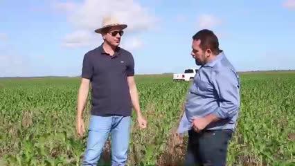 Grupo Santana mostra o desenvolvimento da plantação de milho