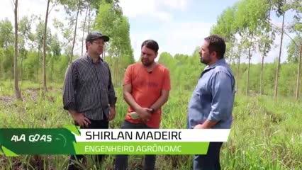 Integração Pecuária Floresta já é uma realidade em Alagoas