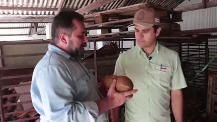 Cooperativa Pindorama investe em produção sustentável no beneficiamento do coco