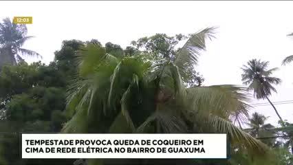 Coqueiro caiu em cima de rede elétrica no bairro de Guaxuma