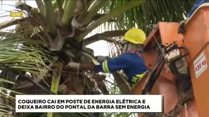 Coqueiro cai sobre rede elétrica e deixa bairro do Pontal da Barra sem energia